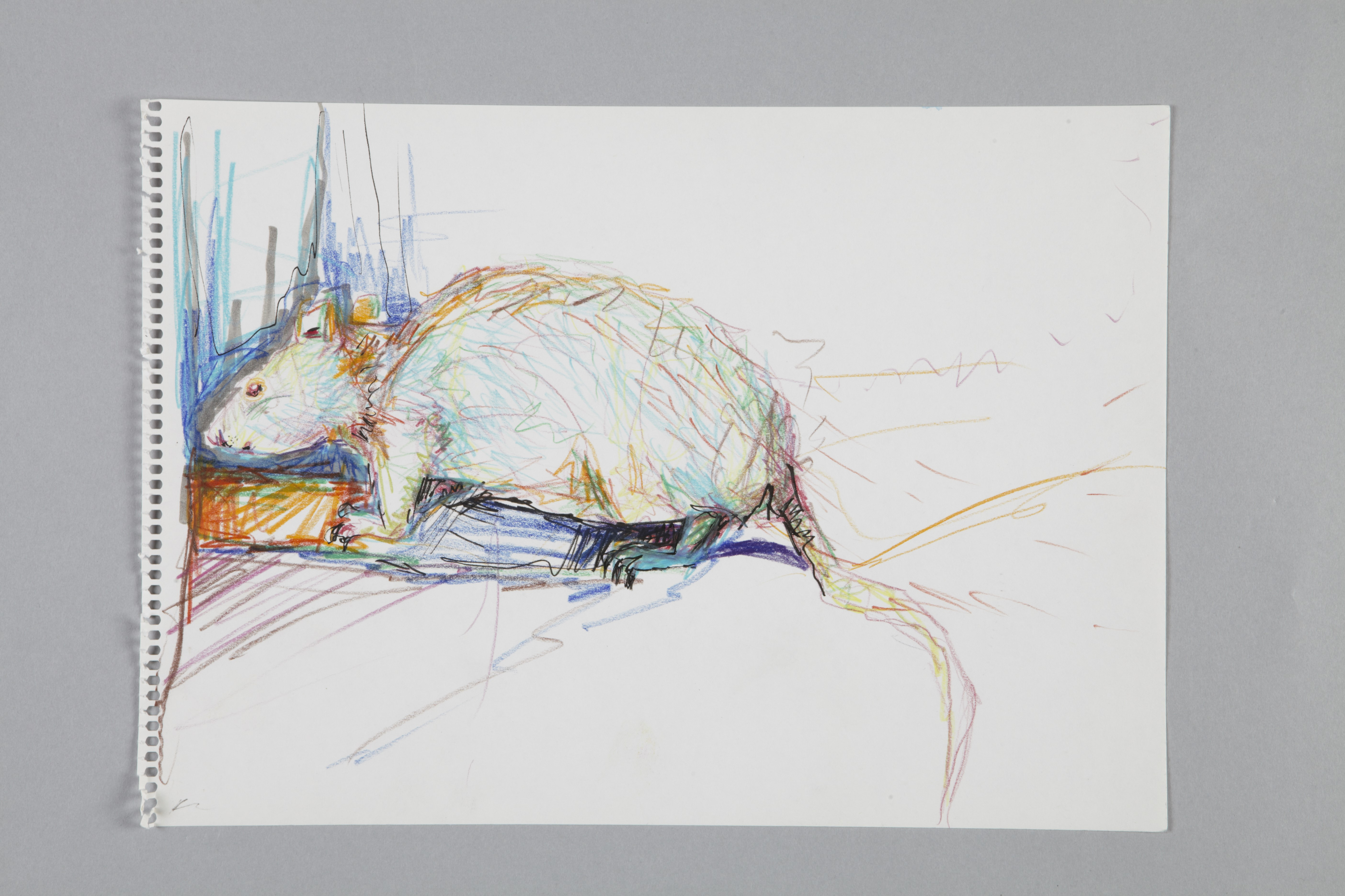 Color pencils and fineliner on paper | Ratte | 40×30 | 2016  | Jule Sonnentag