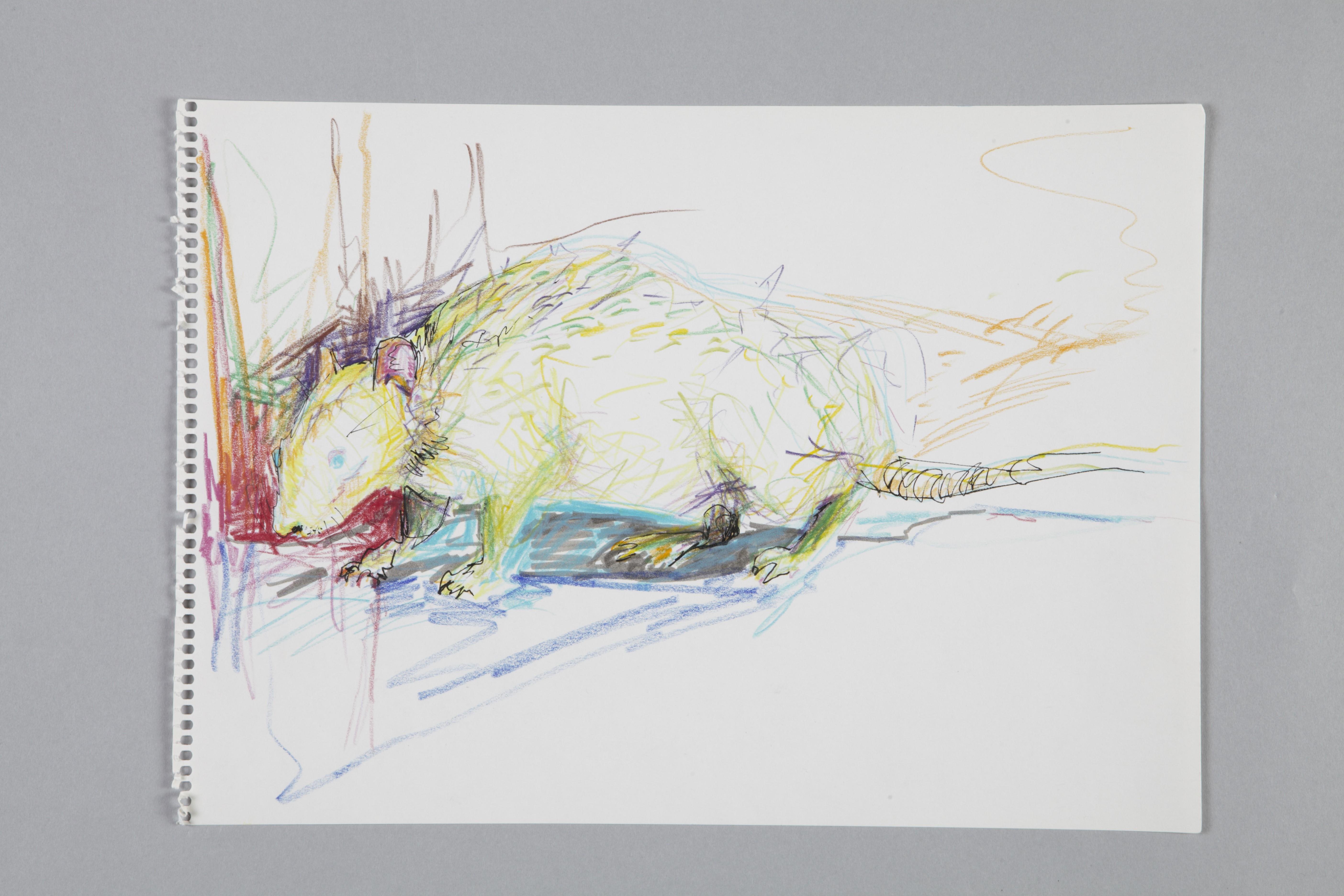 Color pencils and fineliner on paper | Ratte II | 40×30 | 2016 | Jule Sonnentag