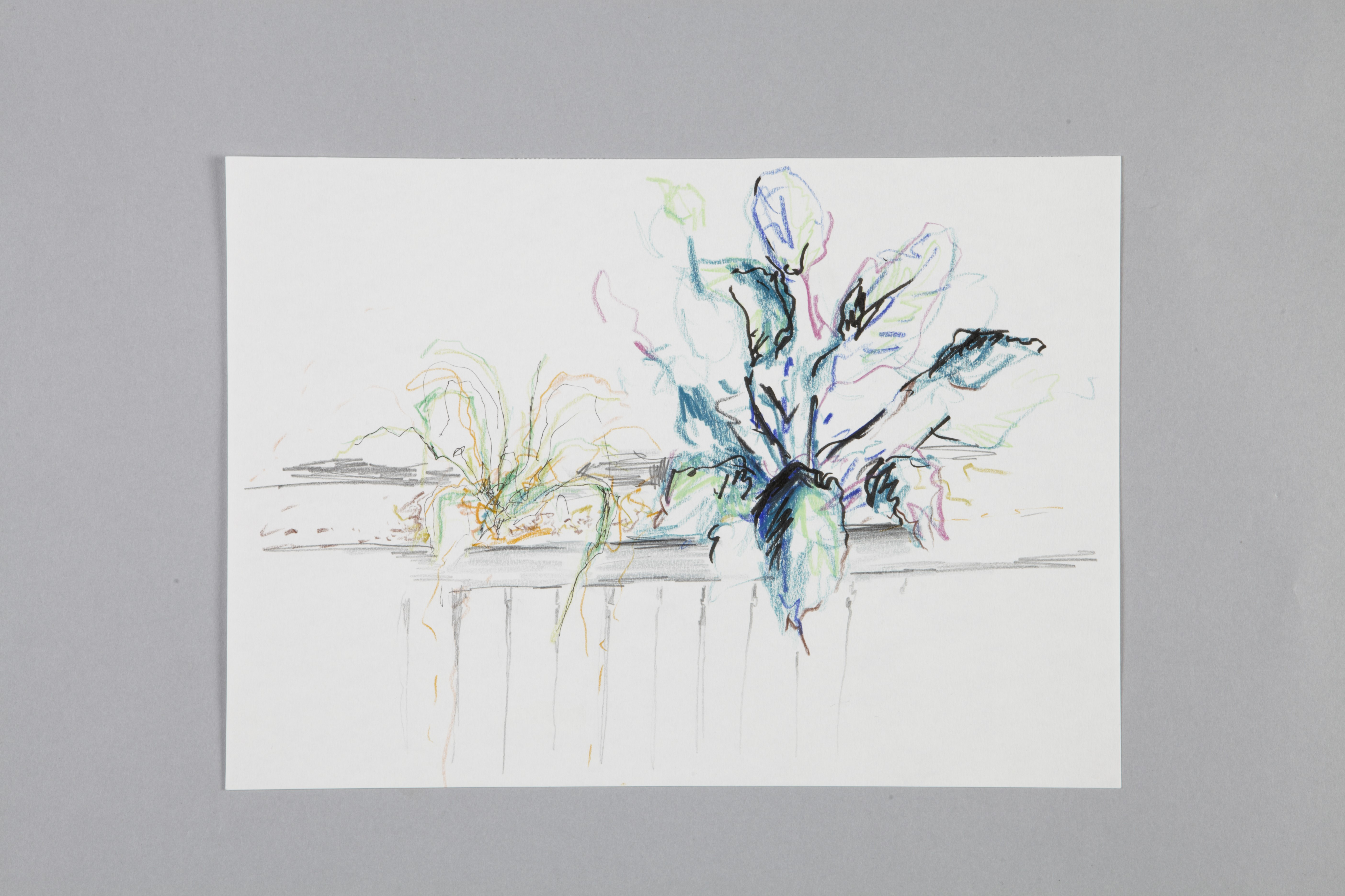Color pencils and fineliner on paper | Kantinenpflanze I | 30×20 | 2017_Jule Sonnentag