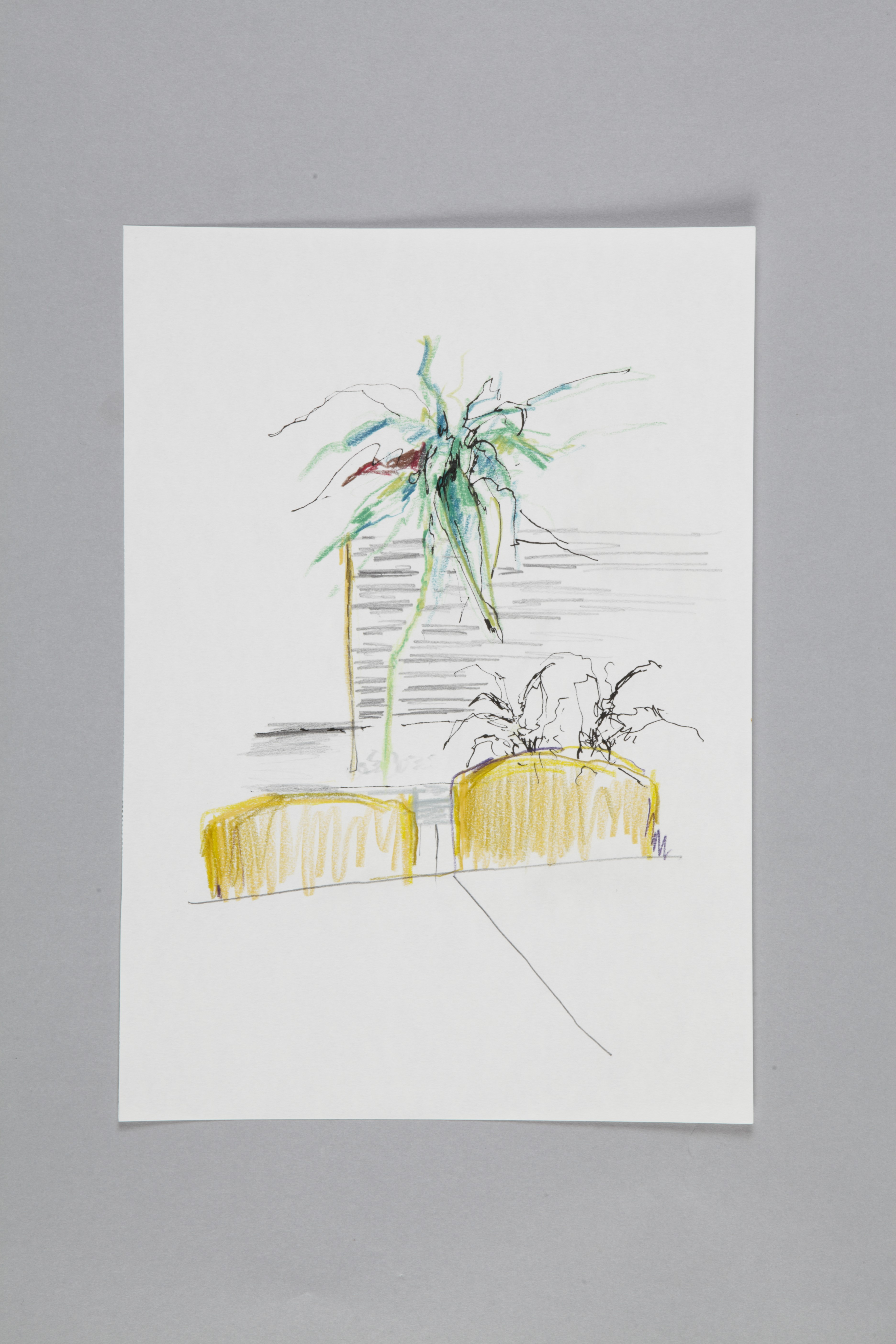Color pencils and fineliner on paper | Kantinenpflanze III | 30×20 | 2017_Jule Sonnentag